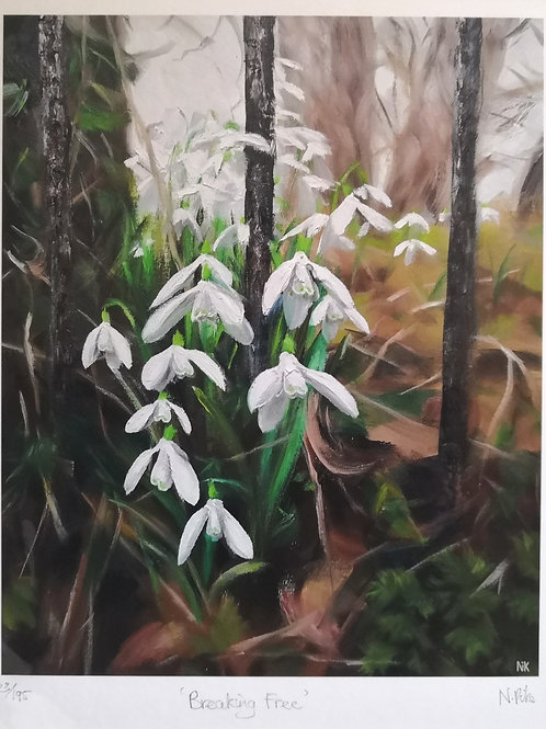 'Breaking Free' snowdrops limited edition print