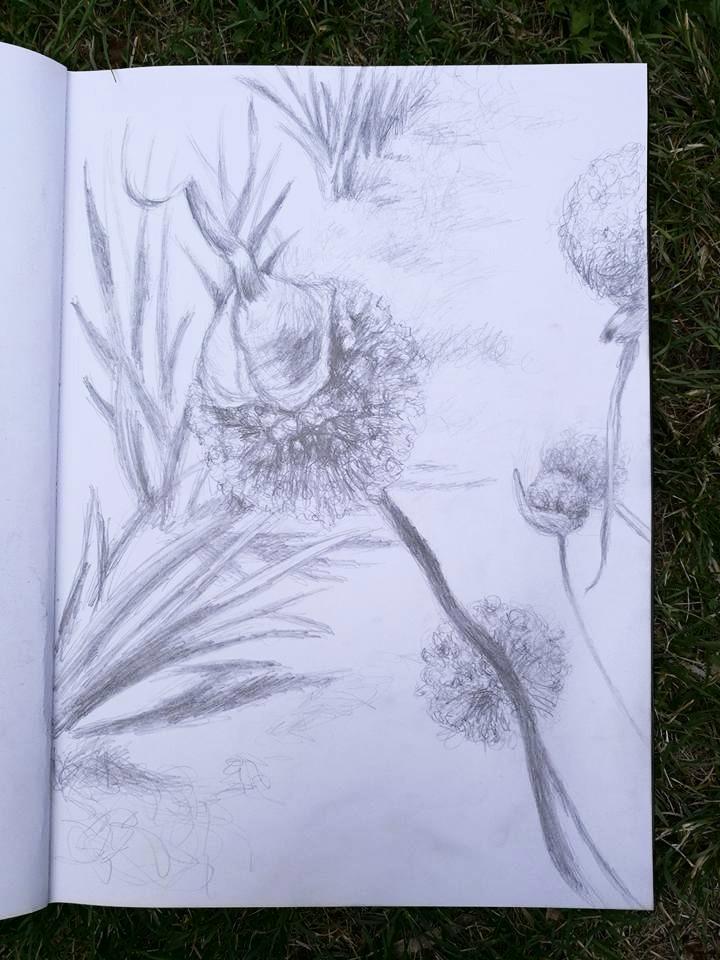 Onion plant sketch_edited