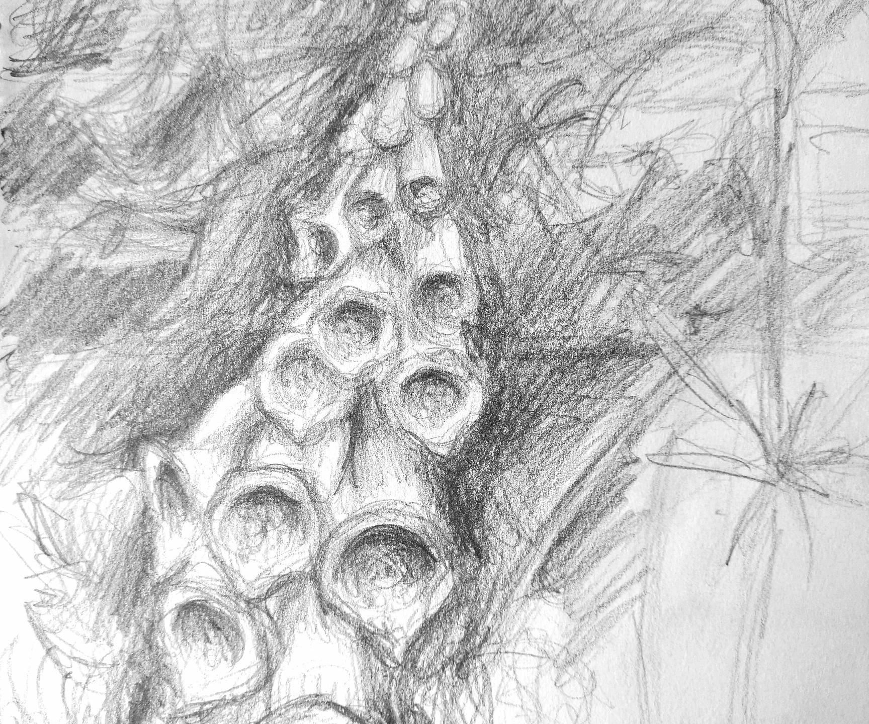 Foxgloves pencil sketch Painswick