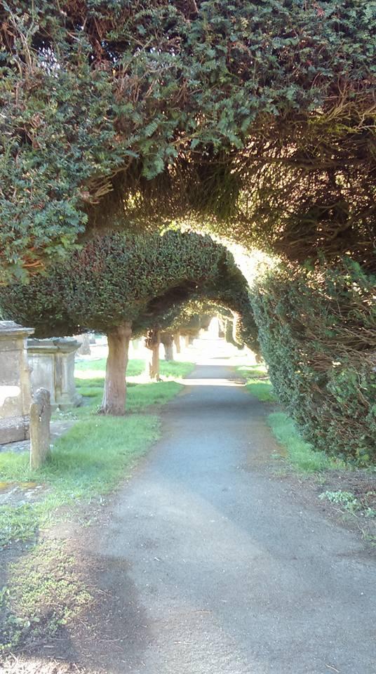 yew hedges 2