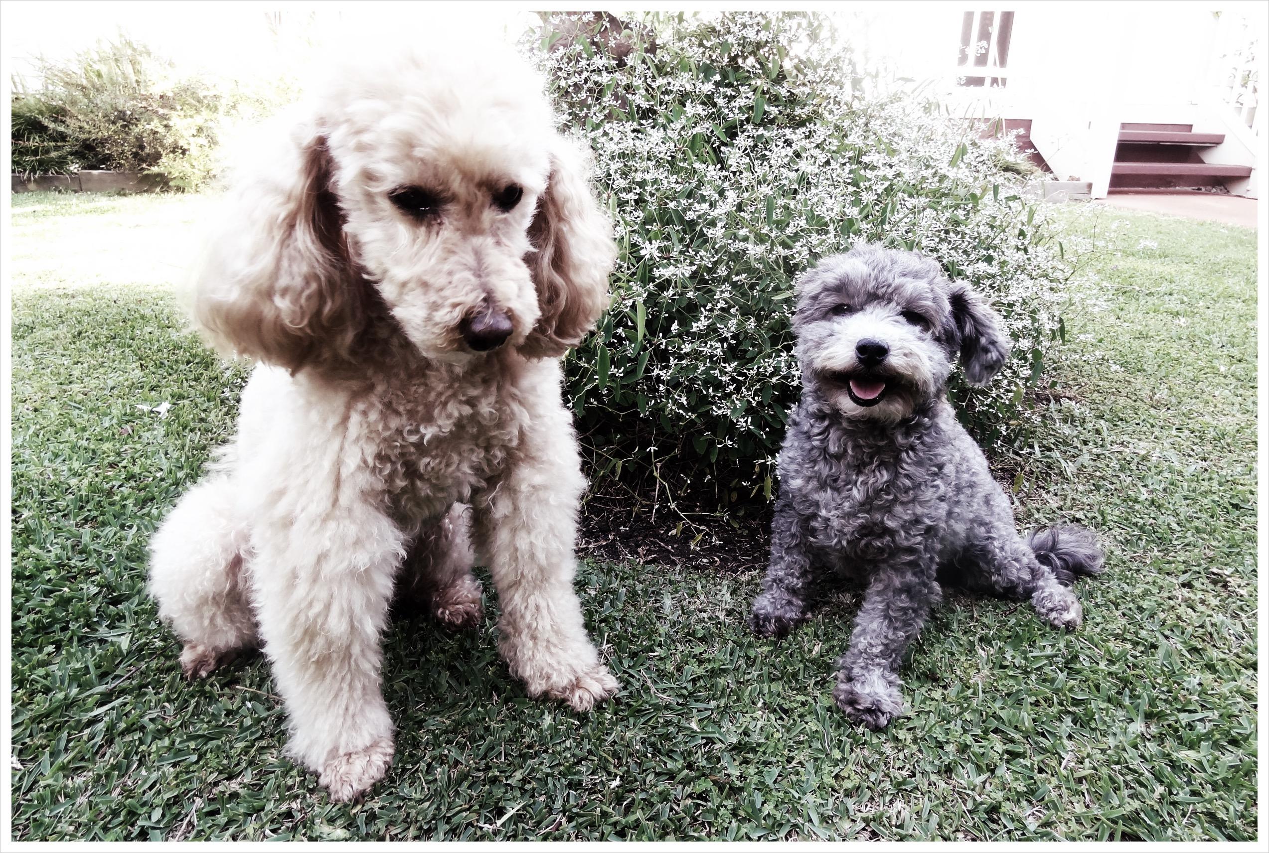 Jojo & Lola