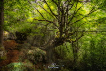 velvet green.jpg