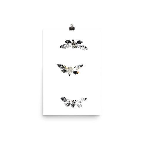 Poster - Resh Cicada (IA93V2)