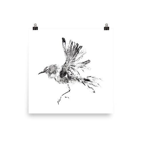Poster - Winter Wren (IA60V1)