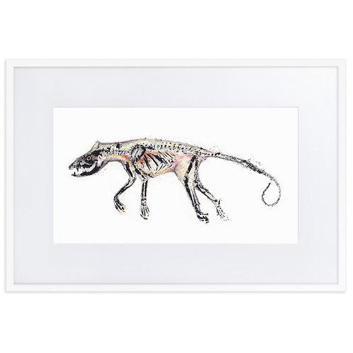 Matte Paper Framed Poster With Mat - Virginia Opossum (IA53V3)