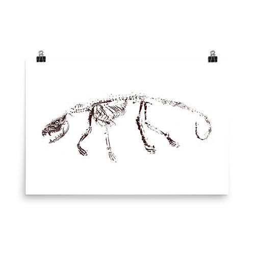 Poster - Virginia Opossum (IA53V2)