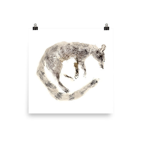 Poster - Ring-tailed Cat (IA85V4)
