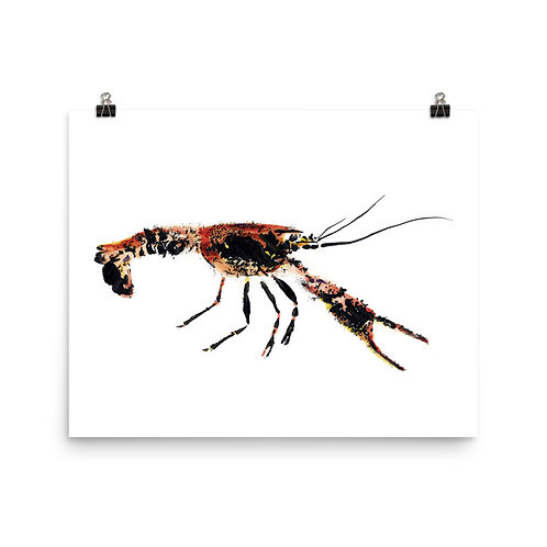 Poster - Red Swamp Crayfish (IA96V2)