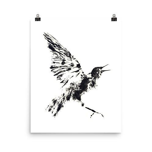 Poster - European Starling (IA11V1)