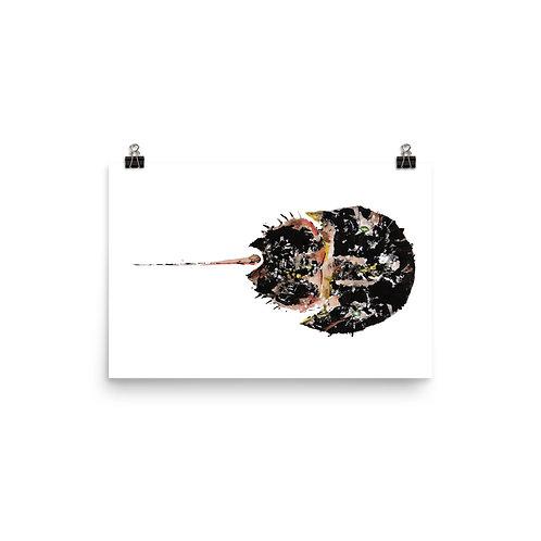 Poster - Atlantic Horseshoe Crab (IA97V2)