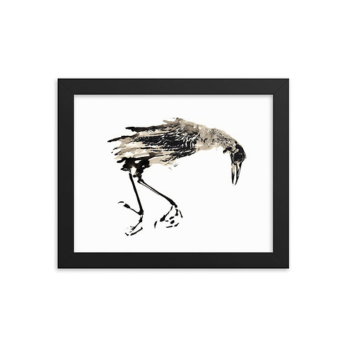 Framed photo paper poster - Great-tailed Grackle (IA76V1)