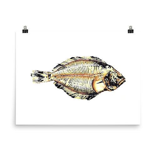 Poster - Southern Flounder (IA69V1)
