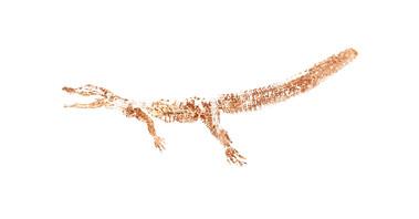 W65_Alligator_mississippiensis_46x24.jpg
