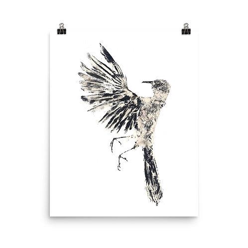 Poster - Northern Mockingbird (IA77V1)