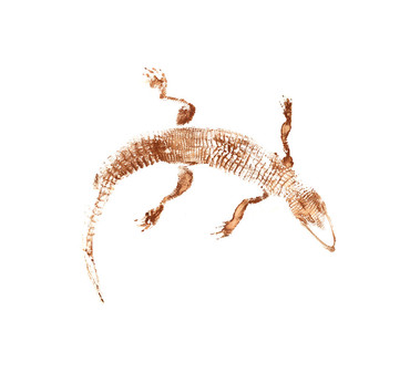 W65_Alligator_mississippiensisversion2_3