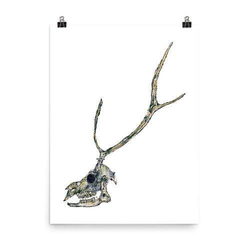 Poster - Sika Deer (IA86V1)