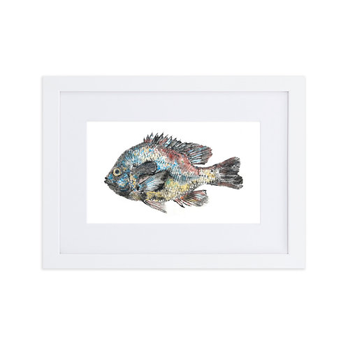 Matte Paper Framed Poster With Mat - Longear Sunfish (IA25V1)