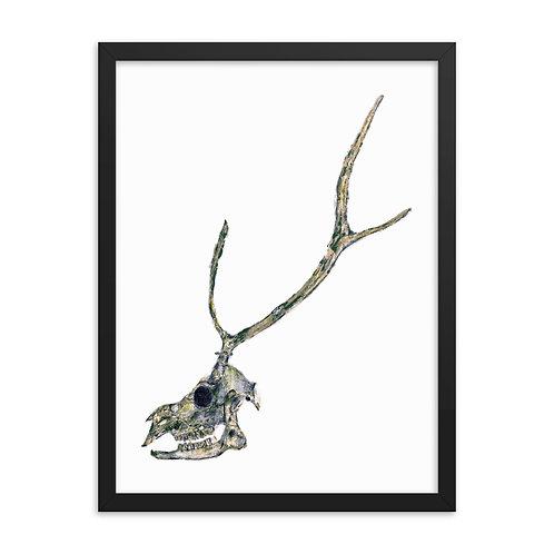 Framed photo paper poster - Sika Deer (IA86V1)