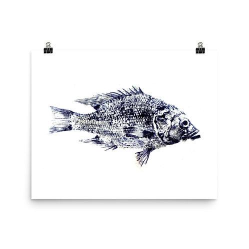 Poster - Green Sunfish (IA30V1)