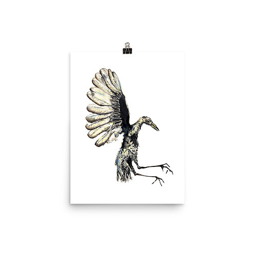 Poster - Great-tailed Grackle (IA76V6)