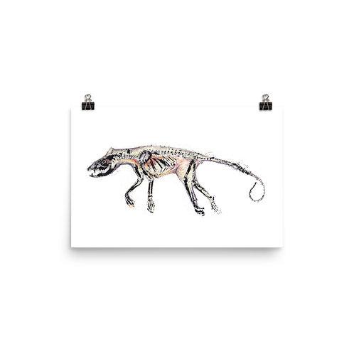 Poster - Virginia Opossum (IA53V3)