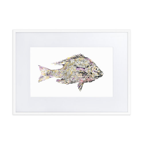Matte Paper Framed Poster With Mat - Redbreast Sunfish (IA21V1)