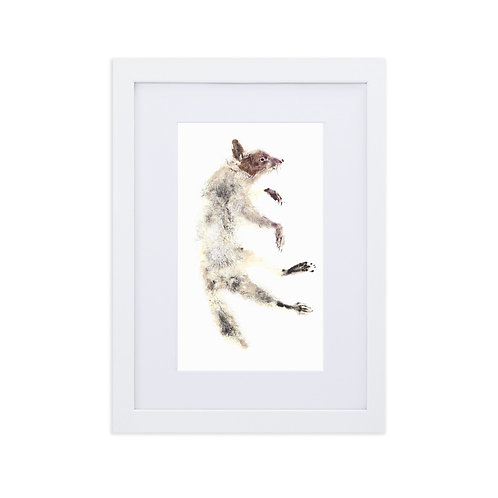 Matte Paper Framed Poster With Mat - Racoon (IA88V2)