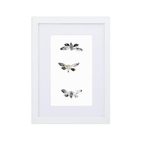Matte Paper Framed Poster With Mat - Resh Cicada (IA93V2)