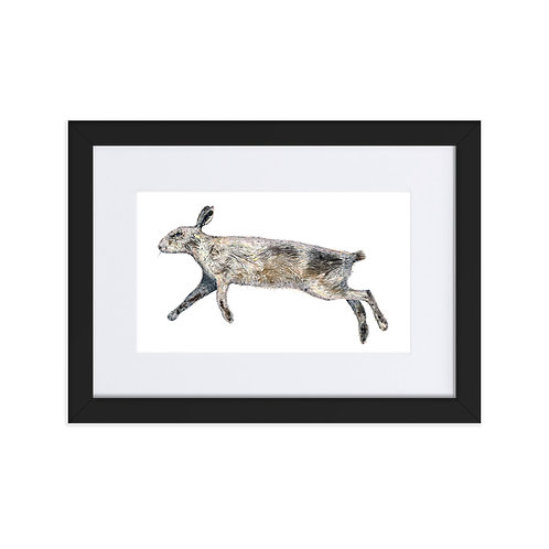 Matte Paper Framed Poster With Mat - Eastern Cottontail Rabbit  (IA84V1)