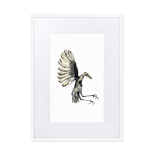 Matte Paper Framed Poster With Mat - Great-tailed Grackle (IA76V6)