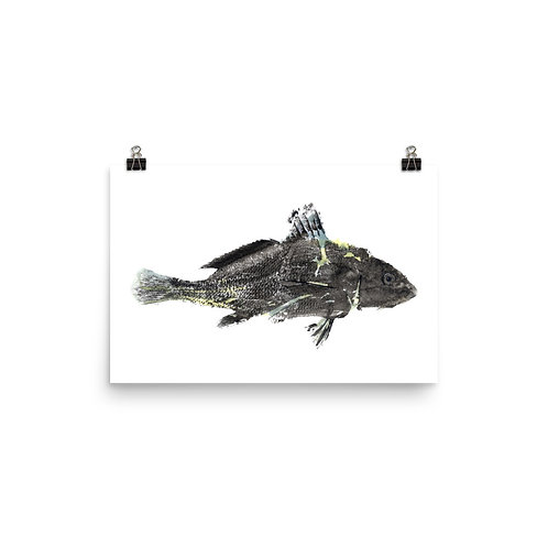 Poster - Atlantic Croaker (IA15V1)