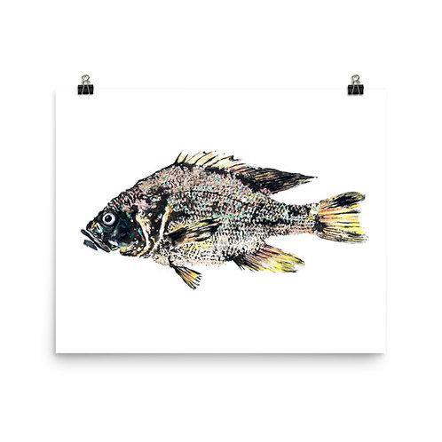 Poster - Green Sunfish (IA30V2)