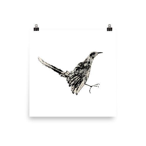 Poster - Northern Mockingbird (IA77V2)