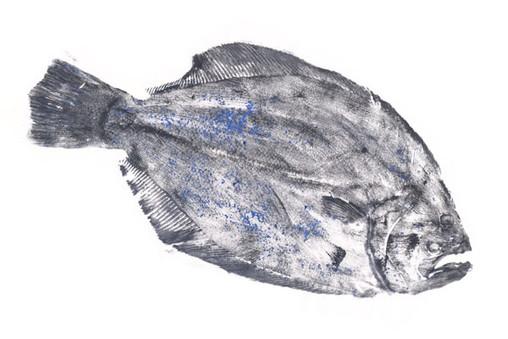 flounder.jpg