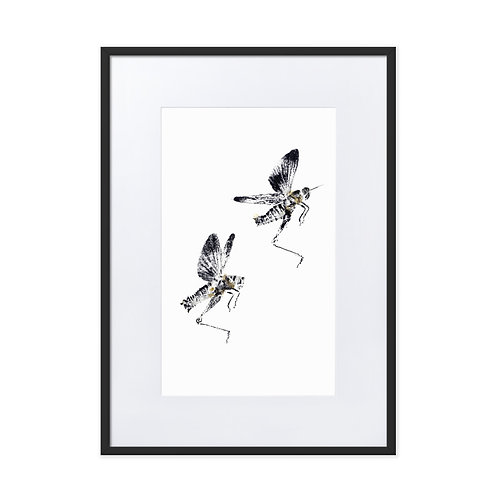 Matte Paper Framed Poster With Mat - Differential Grasshopper (IA99V3)
