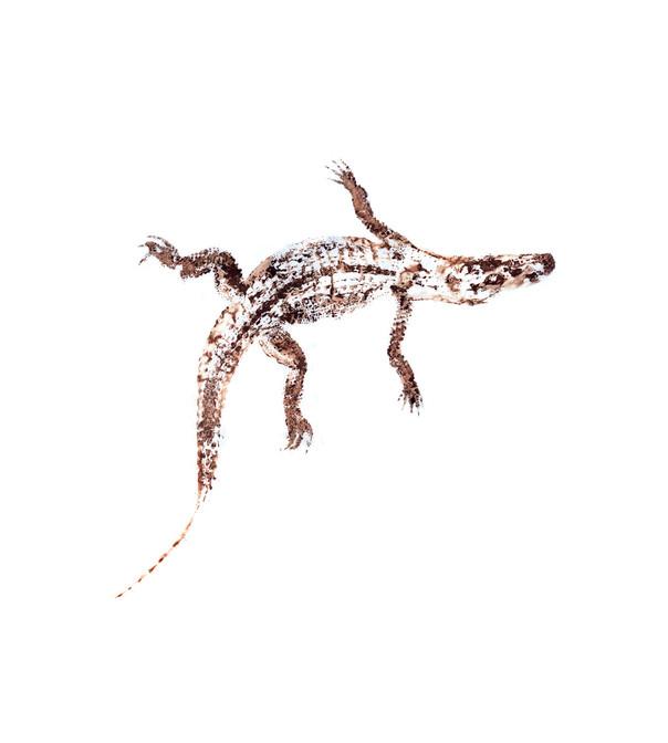 65W_Alligator_mississipien_36x40.jpg
