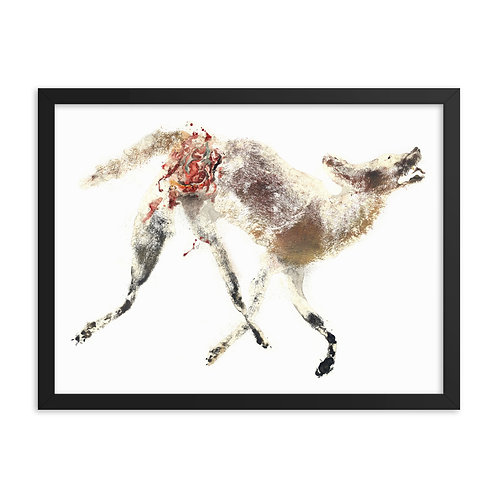 Framed photo paper poster - Coyote (IA101V1)