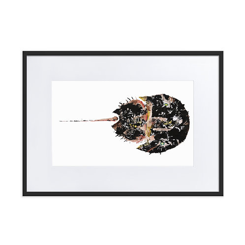 Matte Paper Framed Poster With Mat - Atlantic Horseshoe Crab (IA97V2)