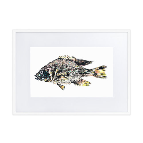 Matte Paper Framed Poster With Mat - Green Sunfish (IA30V2)