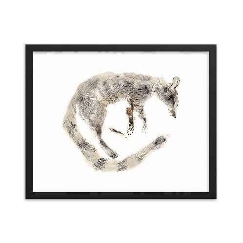Framed photo paper poster - Ring-tailed Cat (IA85V4)