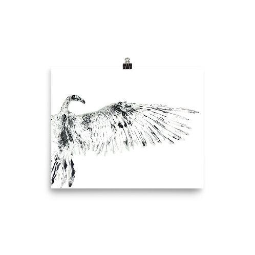 Poster - Turkey Vulture (IA87V1)