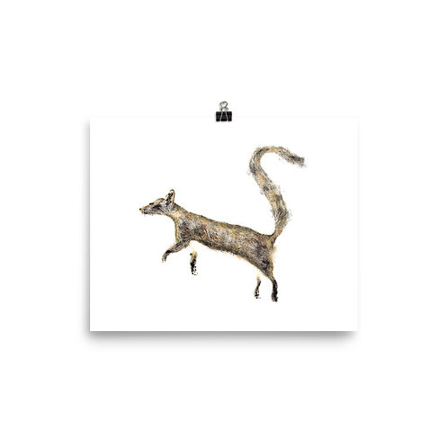 Poster - Ring-tailed Cat (IA85V1)