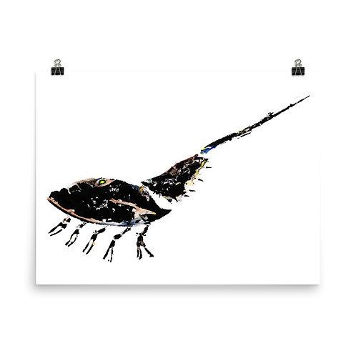 Poster - Atlantic Horseshoe Crab (IA97V6)