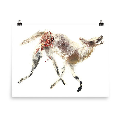 Poster - Coyote (IA101V1)