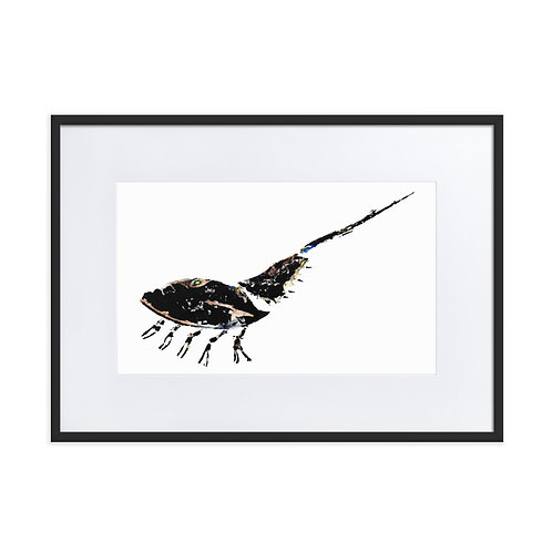 Matte Paper Framed Poster With Mat - Atlantic Horseshoe Crab (IA97V6)