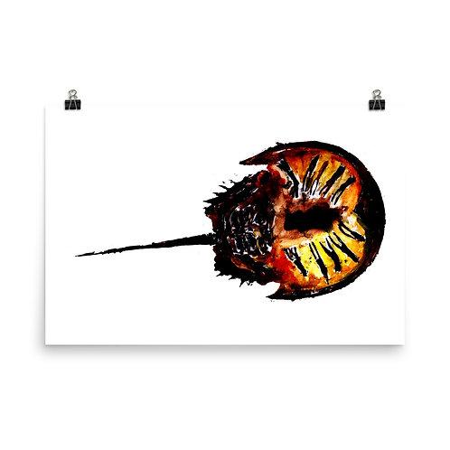 Poster - Atlantic Horseshoe Crab (IA97V4)