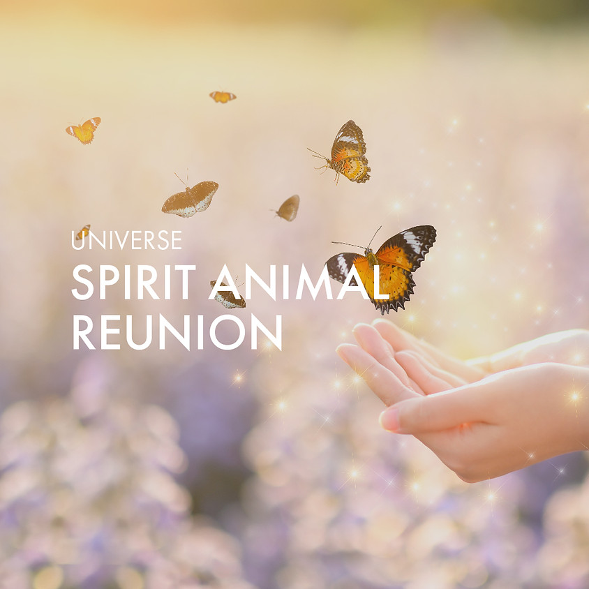 Spirit Animal Reunion