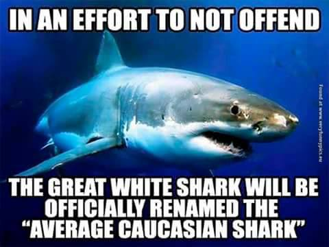 That shark is privileged!