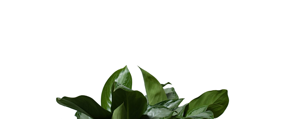 white plant background.png