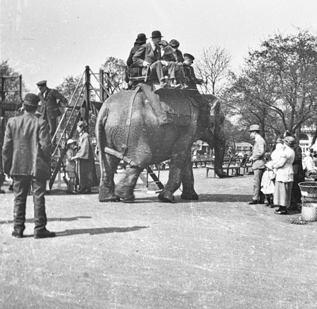 179_Elephant in Zological Gardens 1923